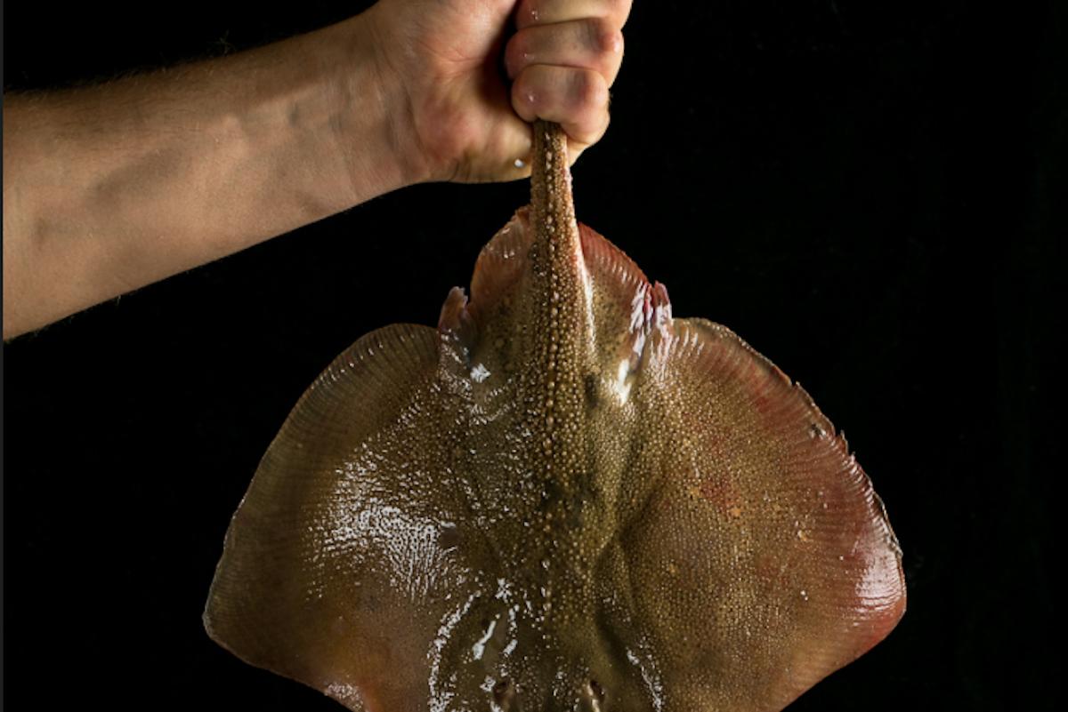 marzapane-pesce